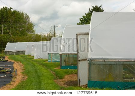 Horticultural polytunnel for growing tender plants and protecting from frost.
