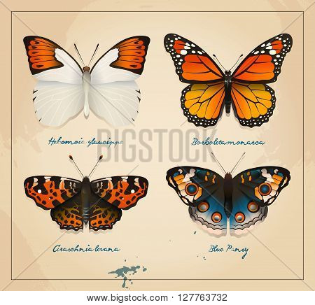 Collection brightly colored butterflies on a background of old paper with watercolor spots.