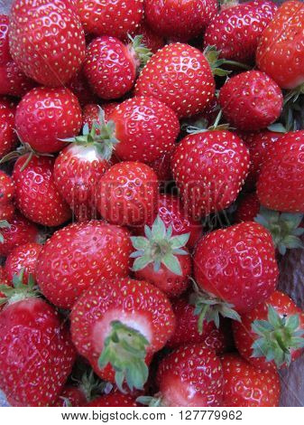 Pile of fresh picked home grown strawberries.
