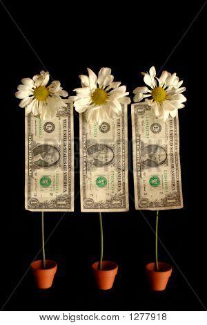 Blooming Dollars