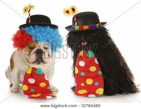 Dog Clowns
