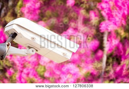 CCTV security camera in gaeden with Bokeh of pink flower background