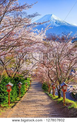 Path to Mt. Fuji in Spring seasaon Fujiyoshida Japan