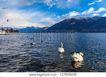 Beautiful view of Maggiore Lake and the Alps from Locarno in Winter Canton of Ticino Switzerland.