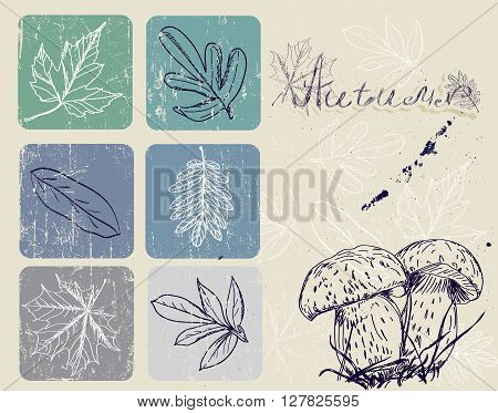Vintage poster with autumn plants. Vector illustration EPS10