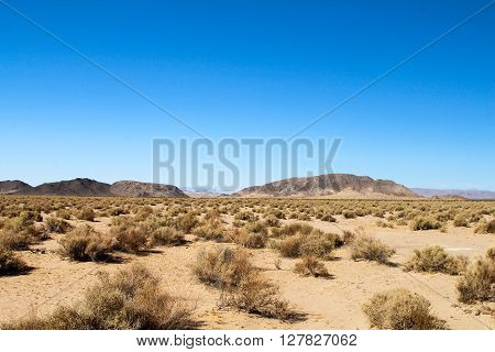 Beautiful landscape of the Mohave desert with plants and smal hills.