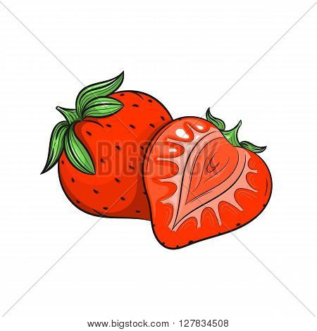 Vector Strawberry illustration. Slice of Strawberry, Strawberry isolated on white background. Vector sketch hand drawn fruit - stock vector
