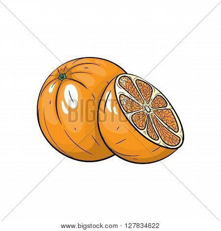 Vector orange illustration. Slice of orange, orange isolated on white background. Vector sketch hand drawn fruit - stock vector
