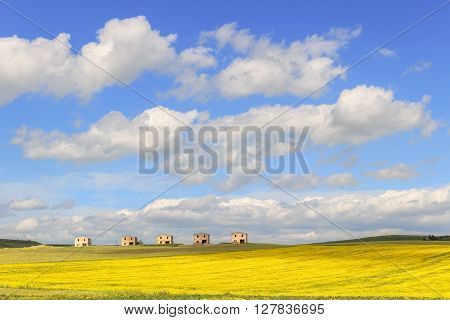 Between Apulia and Basilicata: farmhouses abandoned in a field of yellow flowers.Italy.Spring hilly rural landscape: farmhouses topped by clouds.