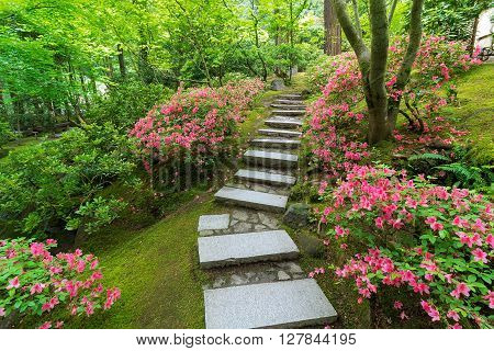 Azaleas in bloom along granite stone stair steps at Japanese Garden in Spring