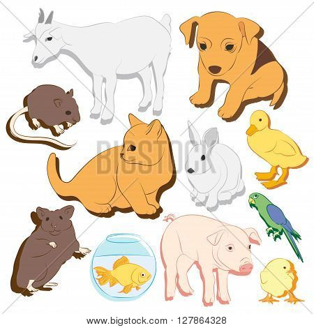 Animals pets vector colorful icons set. Illustrations of various domestic animals - dog, cat, parrot, fish, pig, bunny and other