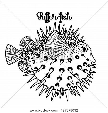 Graphic puffer fish isolated on white background. Sea hedgehog. Sea and ocean creature in black and white colors. Vector element for seafood menu. Coloring book page design