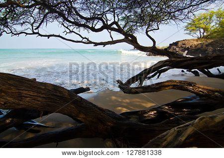 In Wet Woods Of Puako Beach