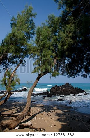 Serene Tree At Entry To Puako Beach