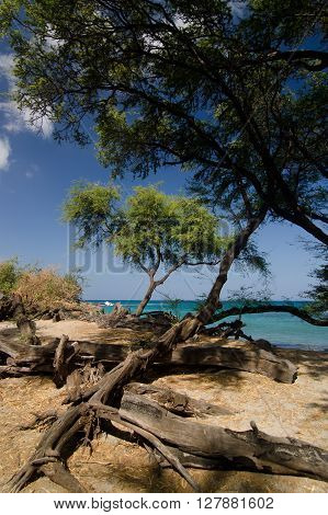 Hiking In Woods Of Puako Beach - 2