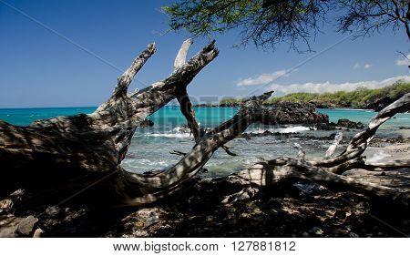 Serene Morning At Puako Beach