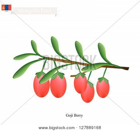 Mongolia Fruit Illustration of Goji Berry. One of The Most Popular Fruits of Mongolia.