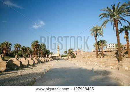 landmark avenue from Luxor to Karnak with row of sculpture sphinx statues human-headed mosque minaret and palms in Thebes ancient city Egypt Africa