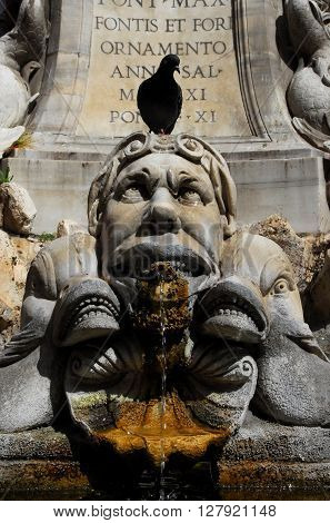 Grotesque marble monster looks at the black pigeon over his head among strange fish or dolphins. A detail from the baroque fountain in front of the Pantheon in Rome