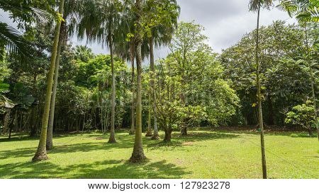The Hawaiian rain forest of Hoomaluhia botanical gardens in Kaneohe Hawaii on the tropical island paradise of Oahu, Hawaii, USA provides a nature hiking trail for pleasure and enjoyment. ** Note: Soft Focus at 100%, best at smaller sizes