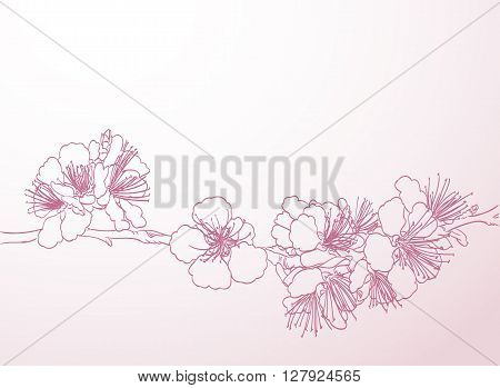 blossoming tree line art hand drawing. spring stylish background with pink plum flowers outline vector