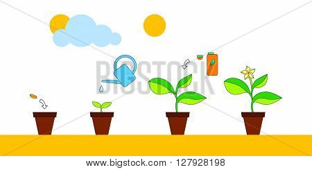 House plant growth and care advice infographics, vector illustration background