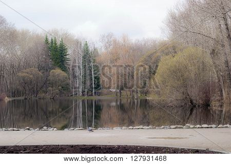 central lake with trees in the spring park