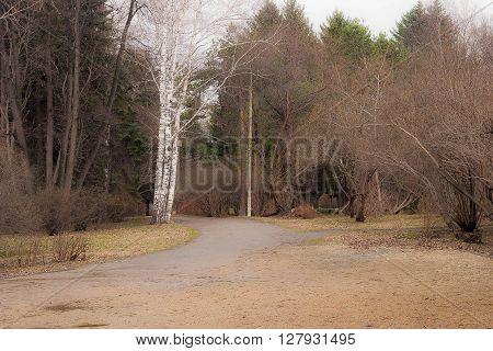 Pathway in spring park. Dull landscape awakening of nature
