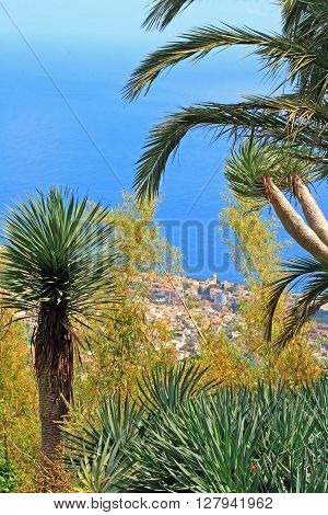 Coast of Madeira, between palm trees and ocean (Madeira, Portugal)