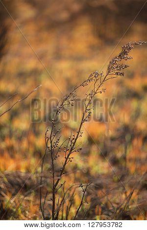 Vegetation destroyed by a bushfire North West Tasmania