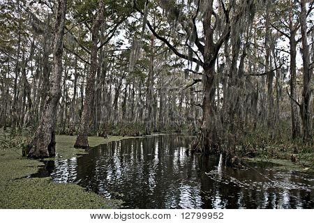 Swamp near New Orleans, Louisiana
