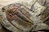 Jurassic Fossilized, prehistoric, pyrite, regis, jurassic, lyme poster
