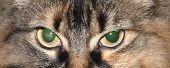 a close up of the eyes of cat poster