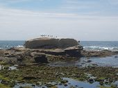 photo of bird rock la jolla california on a very sunny and warm day. poster