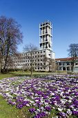 City hall of Aarhus in Denmark with crocus in foreground poster