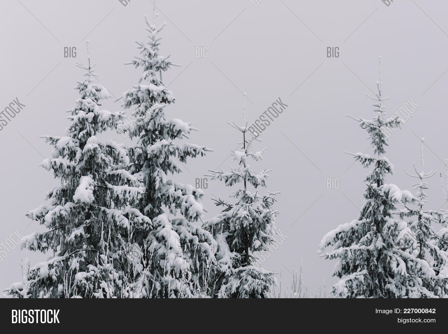 christmas snow covered fir powerpoint template christmas snow