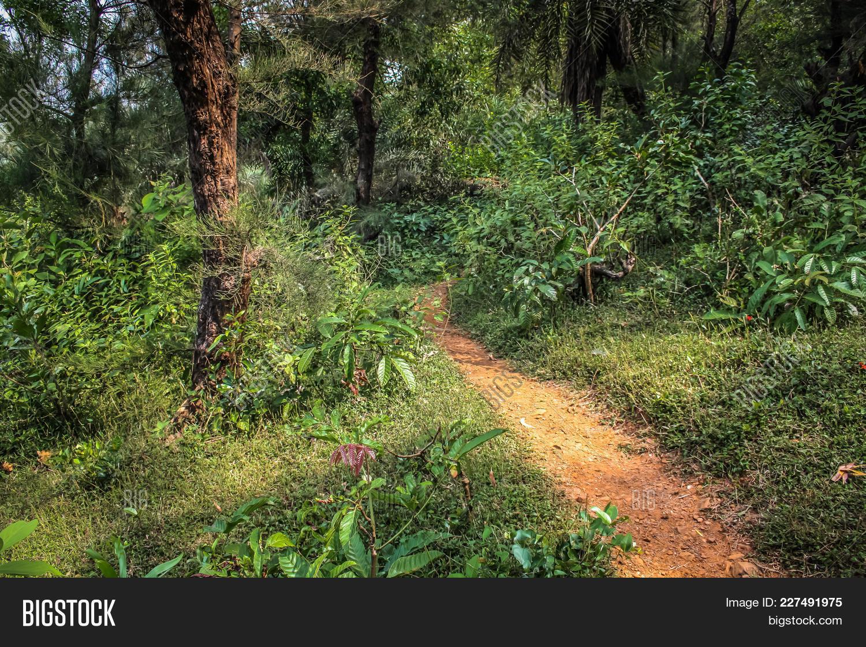 scenery karnataka path jungle powerpoint template scenery