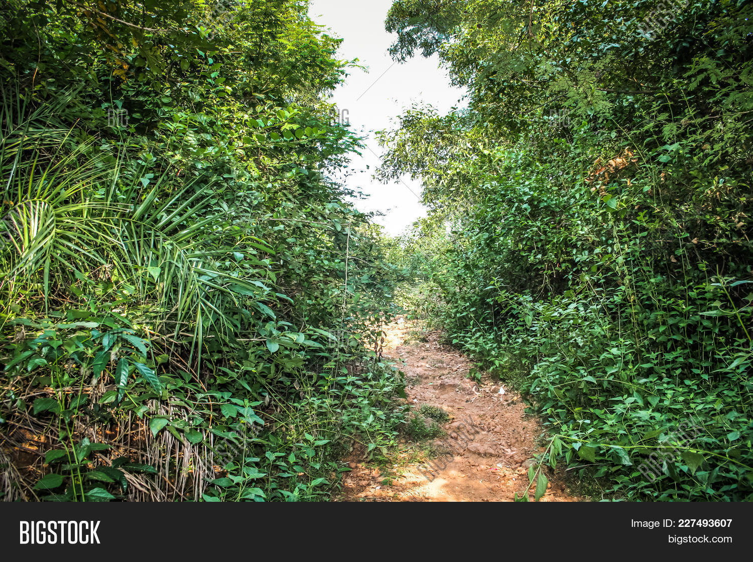 path in the jungle powerpoint background powerpoint template path