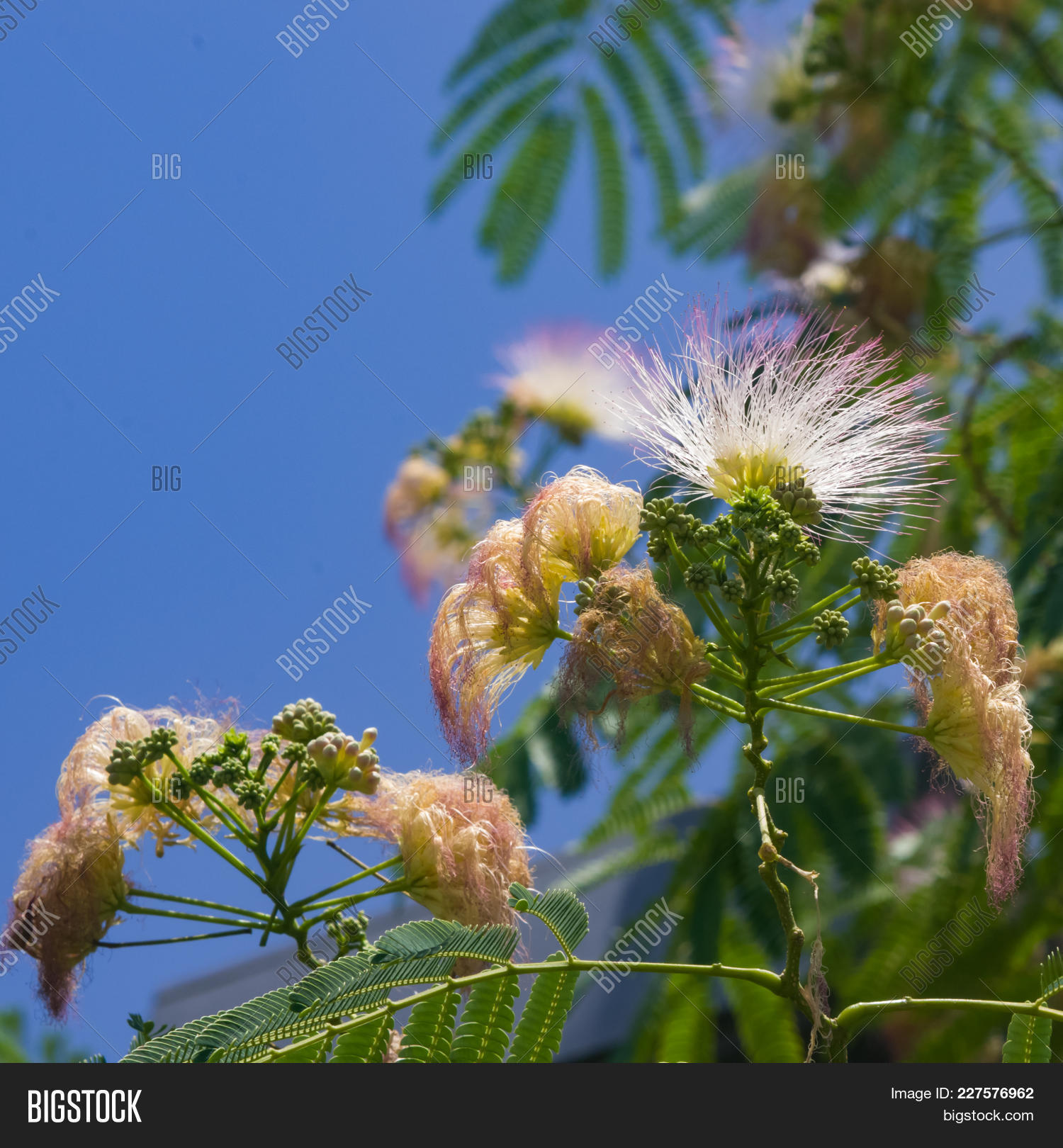 Flowers Buds On Image Photo Free Trial Bigstock