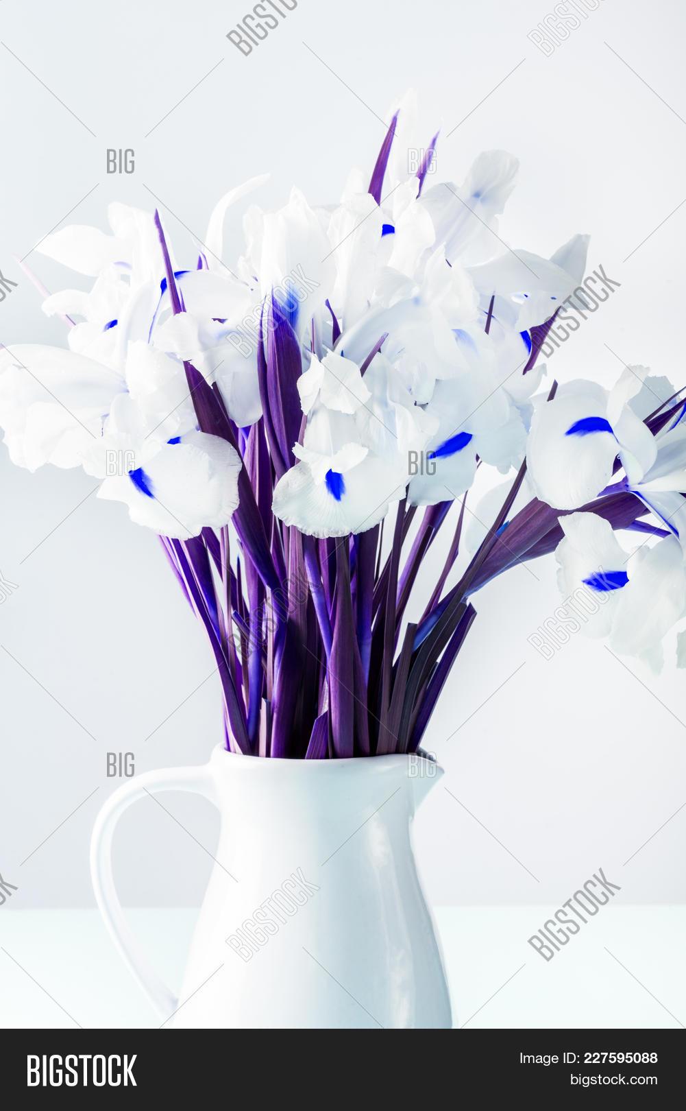 Beautiful white iris image photo free trial bigstock beautiful white iris flowers in the vase minimal art saturated image izmirmasajfo