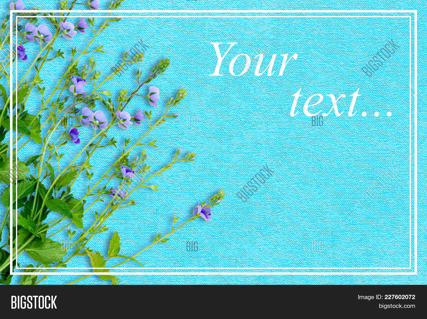 Spring background image photo free trial bigstock spring background with small purple flowers the name of the flower is veronica chamaedrys izmirmasajfo
