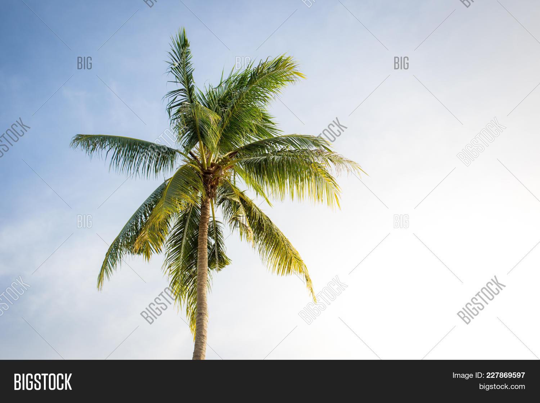 Big coconut powerpoint template big coconut powerpoint background destination powerpoint template 60 slides toneelgroepblik Images