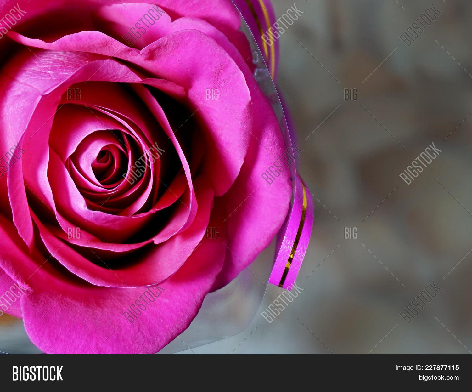 Flowers. Rose Flower Image & Photo (Free Trial) | Bigstock