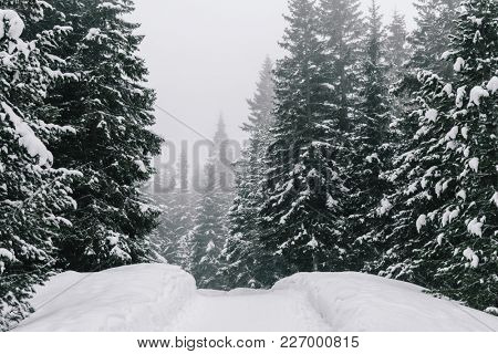 Winter wonderland. Snowy forest.