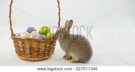 Basket with Easter eggs and bunny on white background