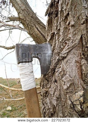 Ax Stuck To A Willow Tree, Use An Ax To Cut Wood