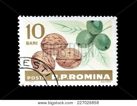 Romania - Circa 1963 : Cancelled Postage Stamp Printed By Romania, That Shows Walnuts.