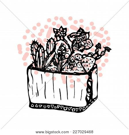 Hand Drawn Creative Trendy Graphic Vector Succulent Cactus Plant Ink Illustration. Artistic Nature P