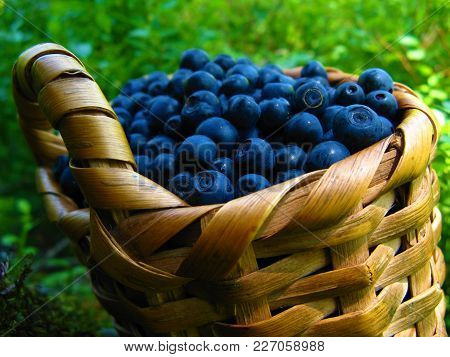 Basket Of Blueberries. One Wicker Basket Of Blueberris On Natural Background