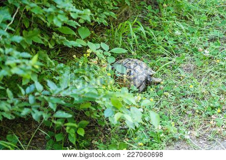 Land Turtle In The Forest Outdoor Park